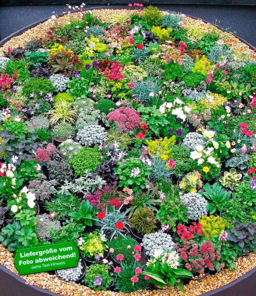 Winterhart Steingarten-Stauden-Mix 10 Pflanzen | eBay
